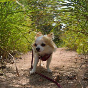 コペリ「この草から匂いがするよ。こっちで間違いなし」