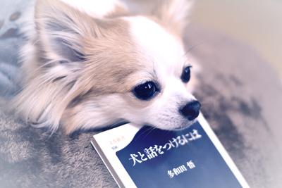 犬と話しをつけるには 多和田悟